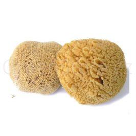 Mořská houba Žlutá pacifická 18-19cm Caribbean Sun